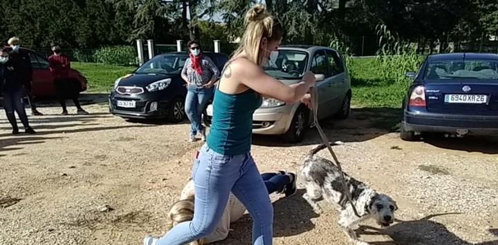Découverte du métier Educateur canin